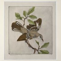 Benson B. Moore - Hand painted Mockingbird Engraving (c. 1930, Signed)