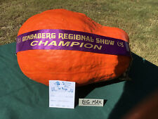 Pumpkin BIG MAX-PUMPKIN SEEDS FROM OUR NEW SHOW CHAMPION-14 FRESH, LARGE SEEDS.