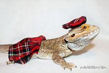 scottish kilt, lizard, bearded dragon, small animal clothing