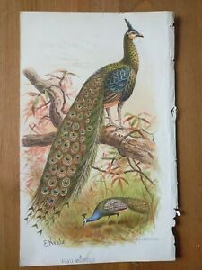 Late 19th C Chromolithographs of various Birds