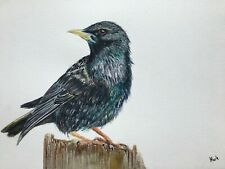 ORIGINAL SIGNED A4 BIRD WATERCOLOUR PAINTING: STARLING
