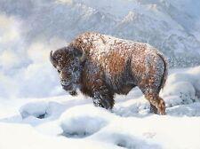 """Early Blizzard"" Bonnie Marris Fine Art Giclee Canvas"