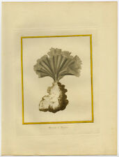 Antique Print-NEPTUNE'S SLEEVE-CORAL-Martinet-Buffon-1770