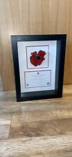 More details for tower of london poppy display case