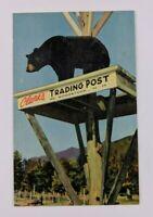 Postcard Linen Soggle Bear Clarks Eskimo Sled Dog Ranch Woodstock New Hampshire