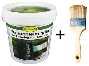 Schacht Baumleim Raupenleim Leimring grün Raupen Insektenleim 1kg + Pinsel Leim