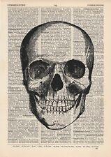 Crâne avant Anatomical Dictionnaire Copie d'art, Anatomie médicale Vintage