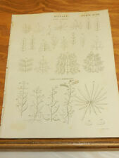 1817 Antique Print/BOTANY//// CLASSIFICATION OF LEAVES