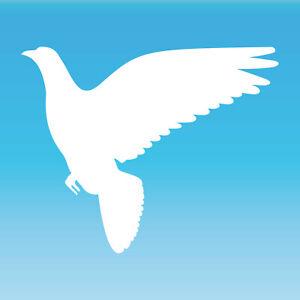 Pegatina Paloma 25cm Blanco Tatoo Lámina Decoración Pájaro Ventana Animal Funda