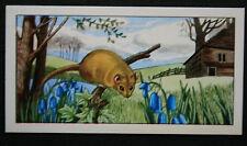 DORMOUSE   Vintage Illustrated Colour Card  # VGC / EXC