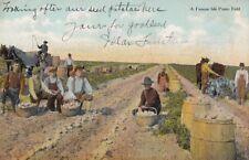 Postcard A Presque Isle Potato Field Pa