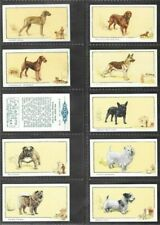 "GALLAHER 1934 SUPERB ( DOGS ) FULL 24 CARD SET """"  DOGS - CAPTION IN BLOCK  """""