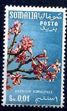 SOMALIA AFIS 1956 - FIORI Nuovo valore **