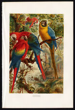 Antique Print-SCARLET-BLUE AND YELLOW MACAW-Brehm-1890