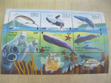 Turks and Caicos Islands Marine life whales fish I201804