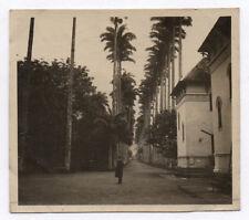PHOTO ANCIENNE Rio de Janeiro Brésil Brazil 1918 Ville Le jardin botanique