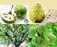 5x Japanische Rahm Apfel Samen Früchte Obst Pflanze Baum Rarität Garten #179