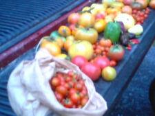 (25) Red Tomato Seeds-Organic Garden-Virginia Grown-Regular