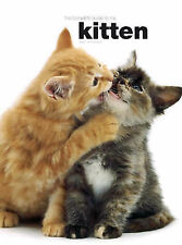 The Complete Guide To The Kitten