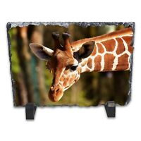 Giraffe Rock Slate Photo Frame - Rectangle