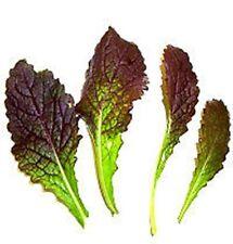 Mostaza Roja. Sabor Picante.  200  Semillas - Seeds.