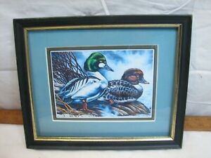 Chris Scheidler Framed Painting Print Bufflehead Duck Decorative Wildlife Art