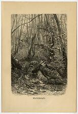 Antique Print-WOODCOCK-SCOLOPAX-Brehm-1890