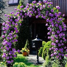 25x Kletterrose Blumensamen Gartenpflanze,Regenbogen,Schwarz,Pink,Andere Farben