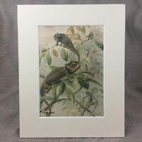 1894 Rettile Stampa Lucertole Camaleonti Esotico Animali Antico Origonal