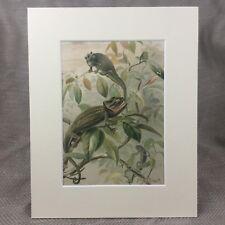 Antique Print Victorian Art Chameleons Chameleon Reptiles Natural History 1894