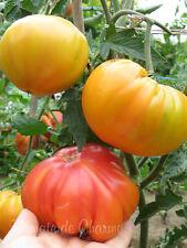 10 graines de tomate rare Enigme de la Nature saveur sucrée avec un arôme fruité