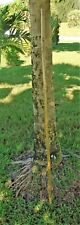 "60"" Custom Handmade Bamboo Walking Hiking Trekking Stick"