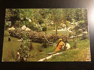 Disneyland Postcard--Frontierland--Beaver Valley--Dam Across River--Intruders C4