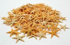 75 piece lot Tiny Star Fish Mini Natural Starfish Wedding Art Craft Shell