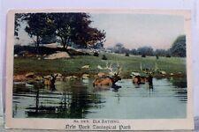 New York Ny Nyc Zoo Park Elk Bathing Postcard Old Vintage Card View Standard Pc