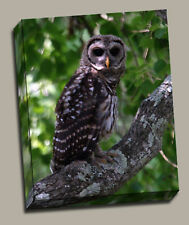 Owl In Tree  Gallery Wrapped Canvas Wildlife Photos by Charlie Bates
