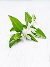 Neroli Oil  30ml for Soaps, Candles and Perfume
