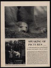 1950 BRUMAS - Baby Polar Bear - 2 Page Magazine Article & Photos