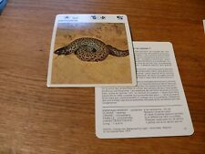 FICHE CARD ANIMAUX ANIMAL amphisbene serpent    REPTILE