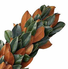 Magnolia Garland / Wholesale / Grower Direct