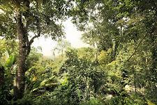 Komar Vliestapete Dschungel