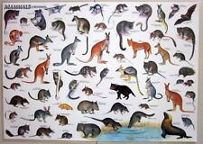Mammals Of Australia Laminated Poster Chart Kangaroo Wombat Koala