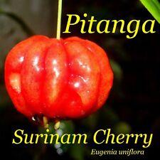 ~LOLITA~ Surinam Cherry Fruit Tree Eugenia uniflora FRUITING AGE LIVE Potd Plant