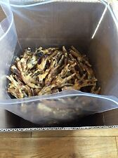Out of stock!!!Dried chicken feet, 3kg box Chicken Feet Natural Treat for Dogs.