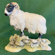 Fabulous Teviotdale - Sheep - Ram