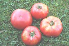 graines de tomate ananas rouge sachets 30 graines culture procédé bio