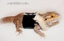 Bomber Jacket, lagartija, Dragón Barbudo, ropa de animales pequeños