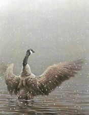 "Stretching Canada Goose - By Robert Bateman LTD Giclee on Canvas size  28"" x 36"""