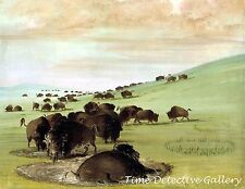 Buffalo Bulls in The Wallow by George Catlin - 1837 - Historic Art Print