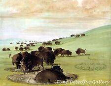 Buffalo Bulls in The Wallow by George Catlin - 1837 - Historic Art Print